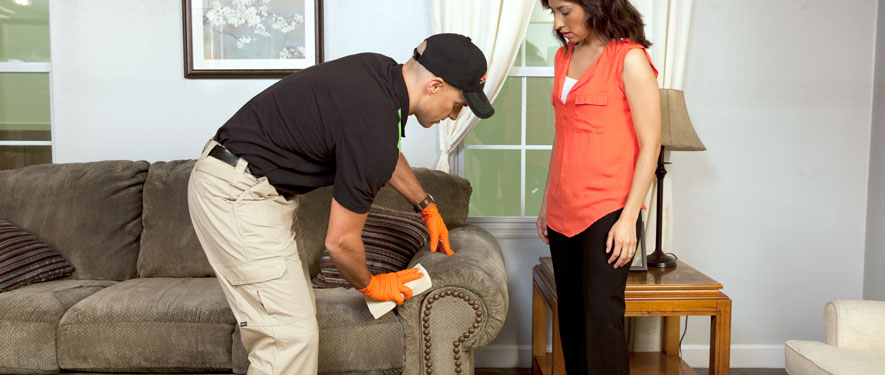 Alpena, MI carpet upholstery cleaning